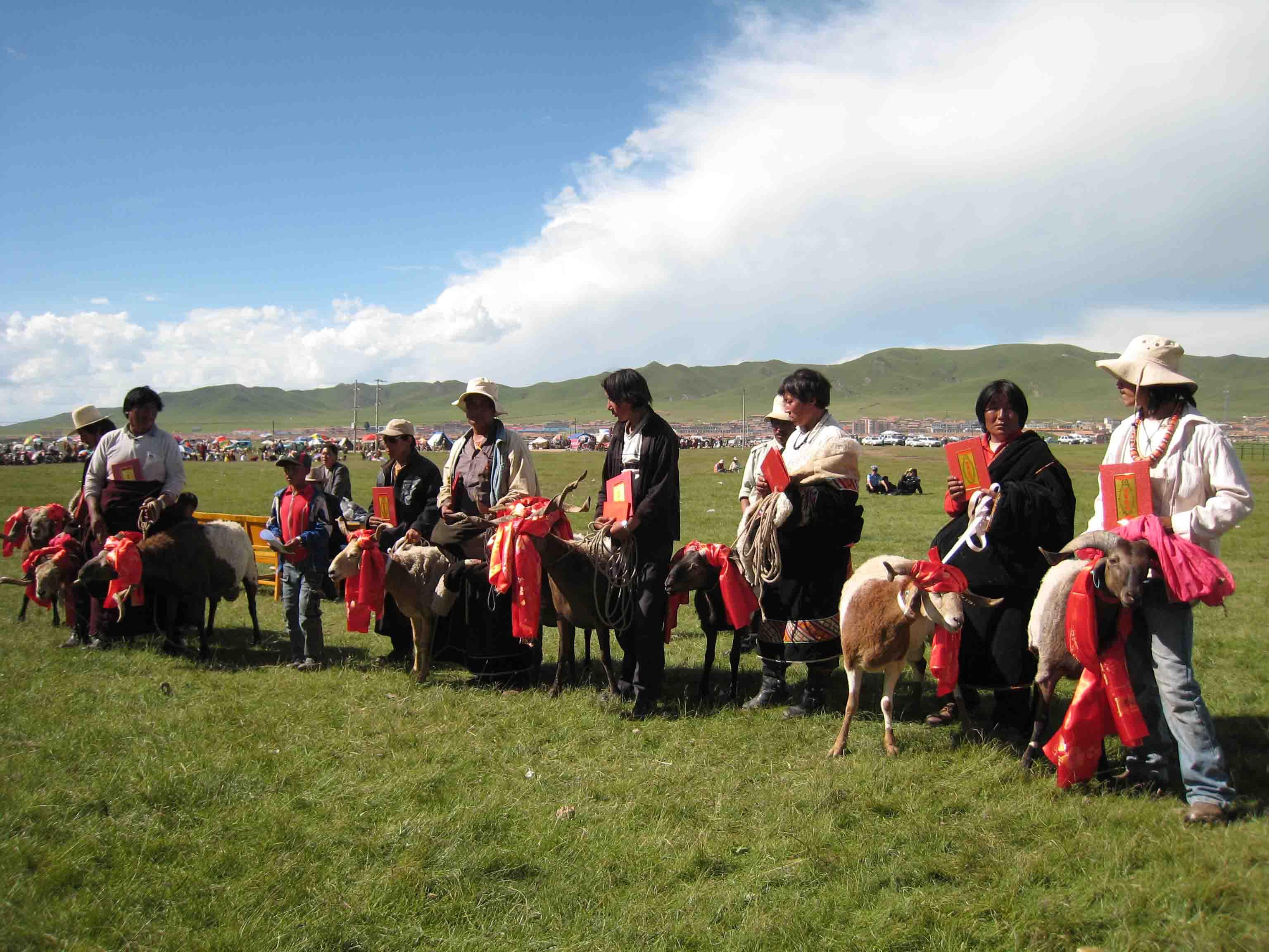 青海省河南县欧拉型藏羊现状调查报告